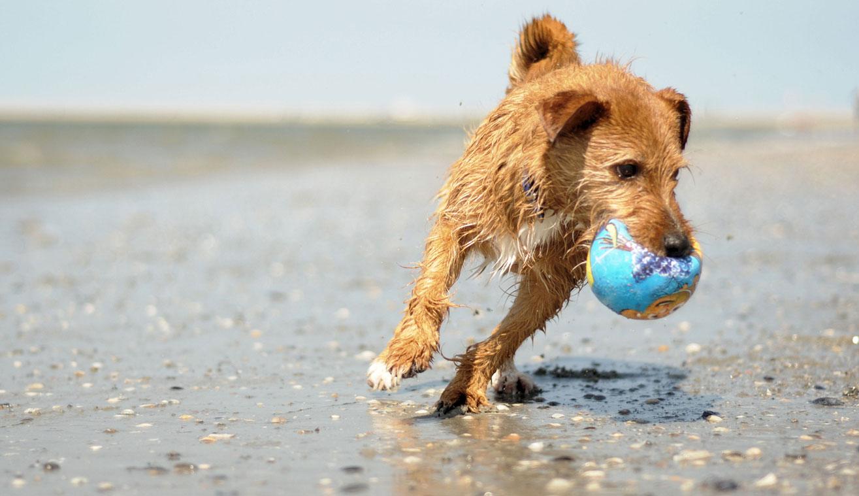 Nordsee Ferienhaus Familienurlaub Zu Zweit Mit Hund Und Pferd