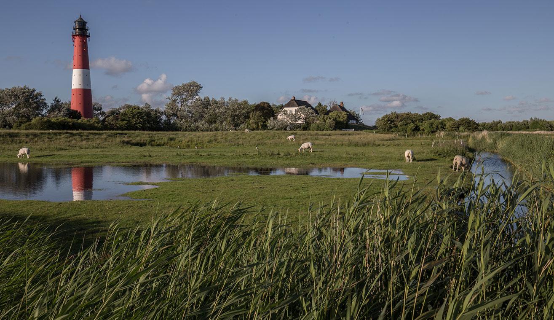 Nordsee ferienhaus familienurlaub zu zweit mit hund und pferd nordseeinsel pellworm for Urlaub auf juist mit hund
